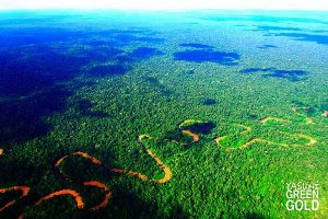 Ecuador fördert Öl am Rand des unberührten Regenwalds in Yasuní