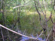 Biotoperhaltung in Differdingen
