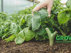 Info-Versammlung zum Projet GROW